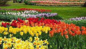 Virágágyásokban is a Fény éve lesz 2015