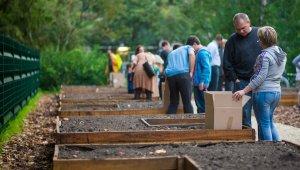 Közösségi kert nyílt Albertfalván