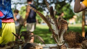 Vetélkedő madarakkal és fákkal