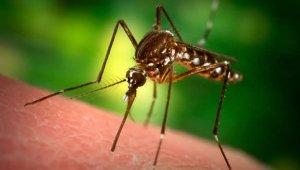 Újra írtják a szúnyogokat Budapesten